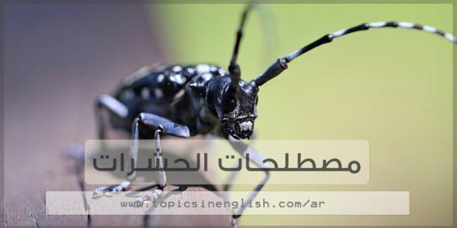 مصطلحات الحشرات