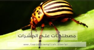 مصطلحات علم الحشرات