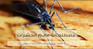مصطلحات عالم الحشرات