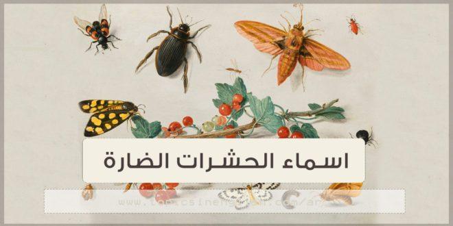اسماء الحشرات الضارة