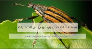 مصطلحات انجليزي عربي عن الحشرات