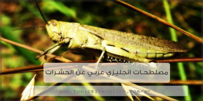 مصطلحات عامة عن الحشرات