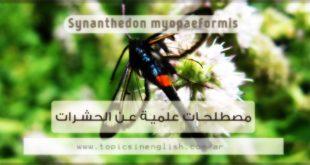 مصطلحات علمية عن الحشرات