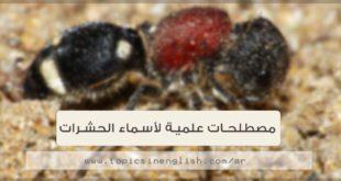 مصطلحات علمية لأسماء الحشرات