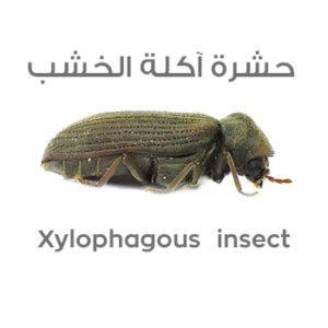 لاشهر الحشرات بالصور