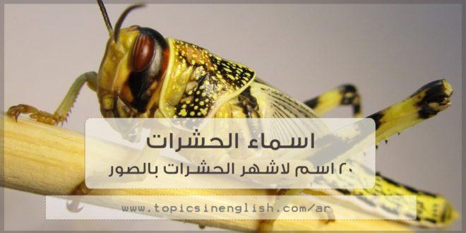 اسماء الحشرات 20 اسم لاشهر الحشرات بالصور