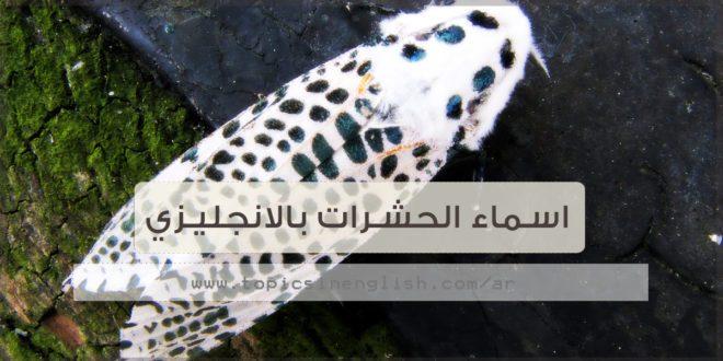 اسماء الحشرات بالانجليزي