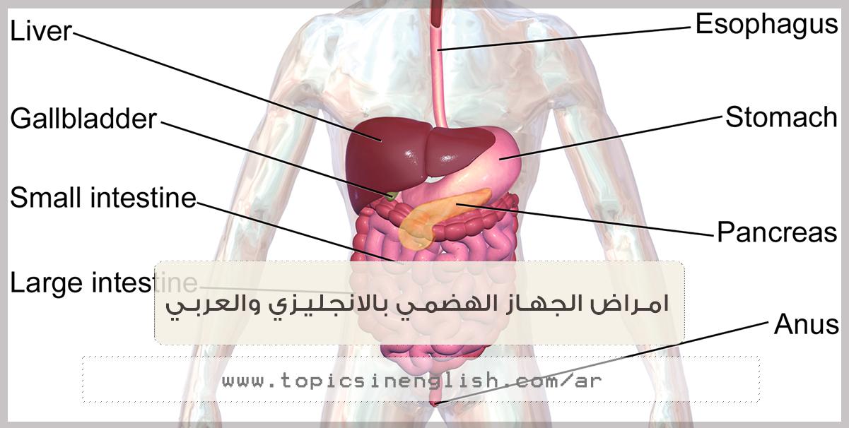 امراض الجهاز الهضمي بالانجليزي والعربي مواضيع باللغة الانجليزية