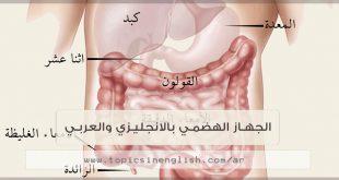الجهاز الهضمي بالانجليزي والعربي
