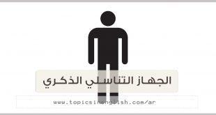 الجهاز التناسلي الذكري عربي انجليزي