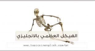 الهيكل العظمي بالانجليزي