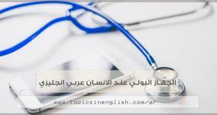 الجهاز البولي عند الانسان عربي انجليزي