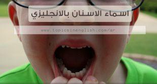 اسماء الاسنان بالانجليزي