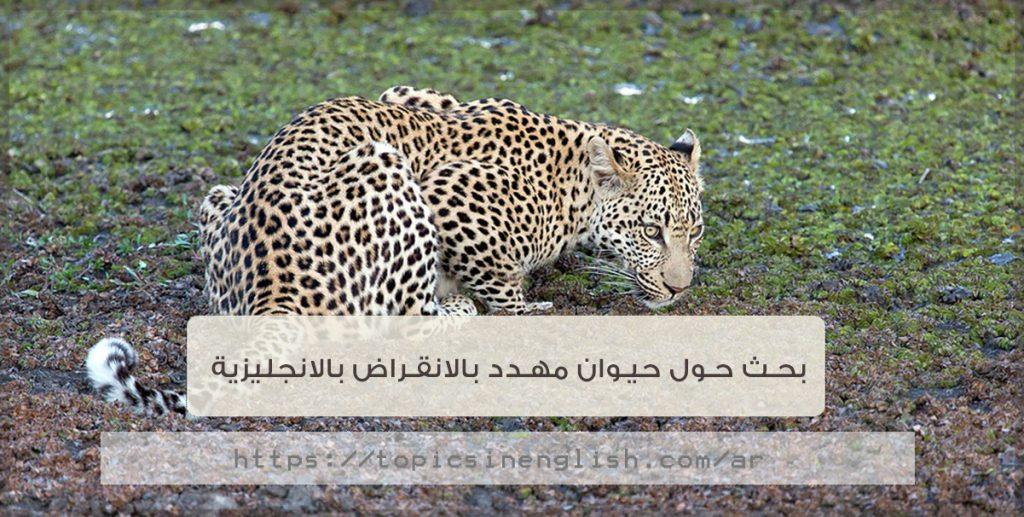 بحث حول حيوان مهدد بالانقراض بالانجليزية   مواضيع باللغة ...