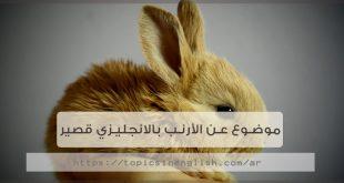موضوع عن الأرنب بالانجليزي قصير