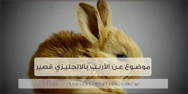 5f387236091c6 موضوع عن الأرنب بالانجليزي قصير