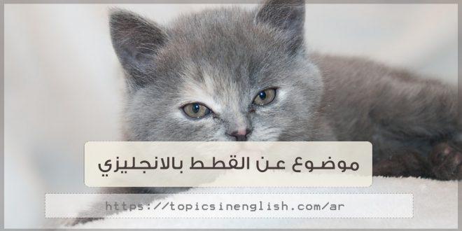 موضوع عن القطط بالانجليزي | مواضيع باللغة الانجليزية