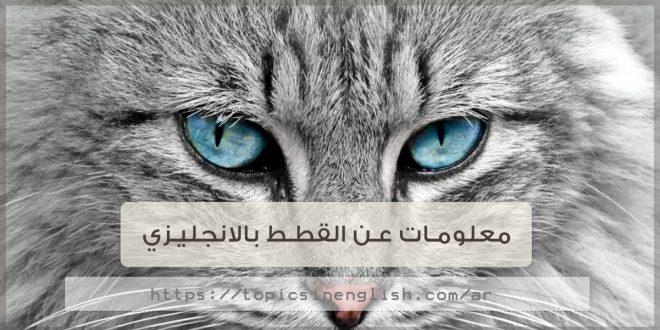 معلومات عن القطط بالانجليزي