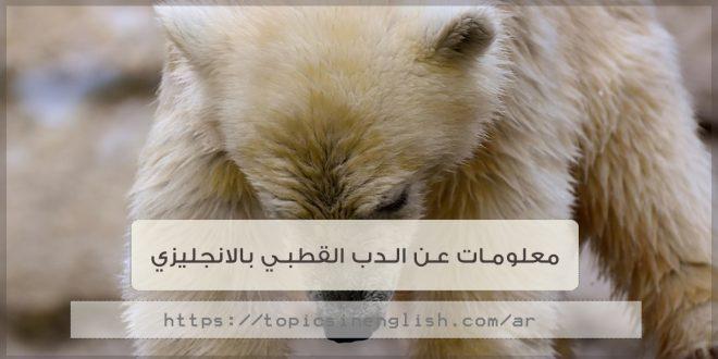 معلومات عن الدب القطبي بالانجليزي مواضيع باللغة الانجليزية