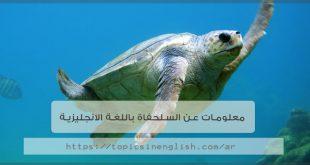 معلومات عن السلحفاة باللغة الانجليزية