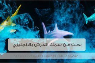 بحث عن سمك القرش بالانجليزي