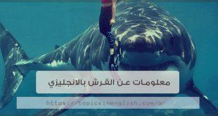 معلومات عن القرش بالانجليزي