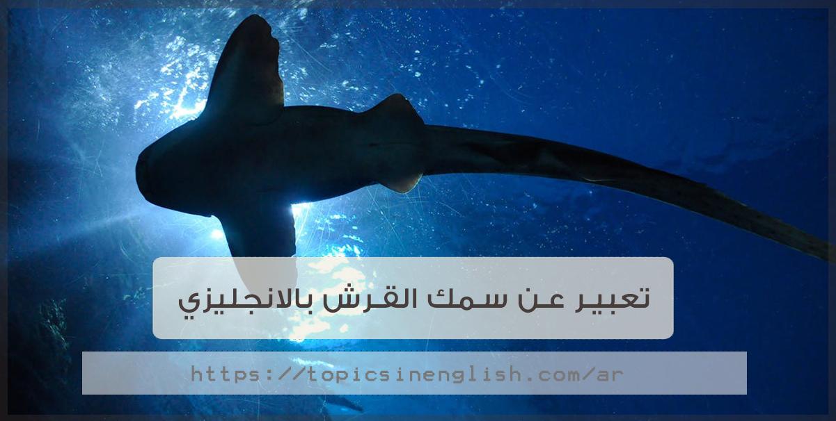 تعبير عن سمك القرش بالانجليزي مواضيع باللغة الانجليزية
