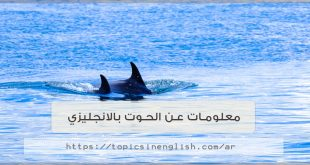 معلومات عن الحوت بالانجليزي