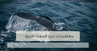 معلومات عن الحوت الازرق بالانجليزي