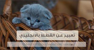 تعبير عن القطط بالانجليزي