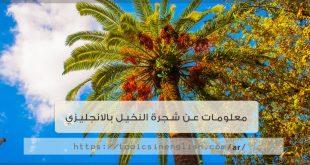 معلومات عن شجرة النخيل بالانجليزي