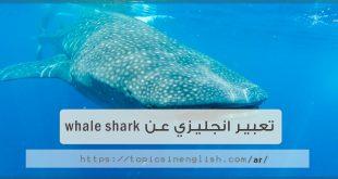 تعبير انجليزي عن whale shark