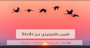 تعبير بالانجليزي عن birds