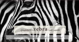 تعبير عن zebra بالانجليزي