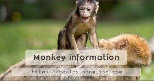 Monkey information