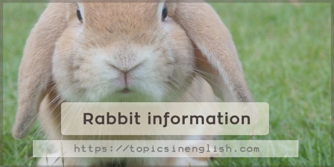 Rabbit information