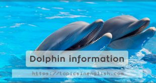 Dolphin information