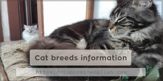 Cat breeds information