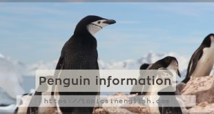 Penguin information