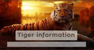 Tiger information