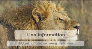 Lion information