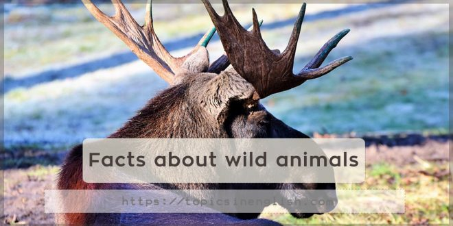 Facts about wild animals