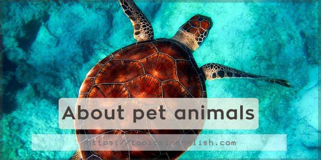 About pet animals