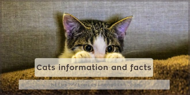 Cats information and facts