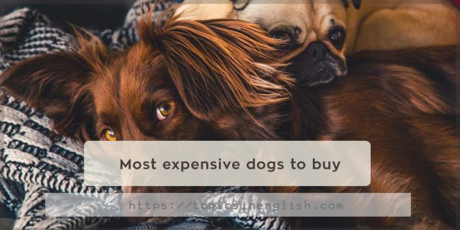 Most expensive dogs to buy