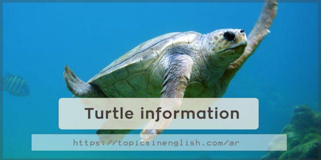 Turtle information